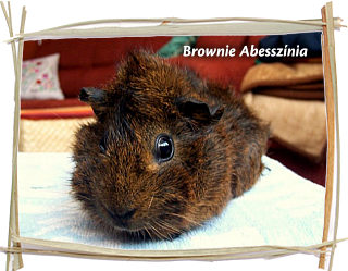 Brownie Abesszínia